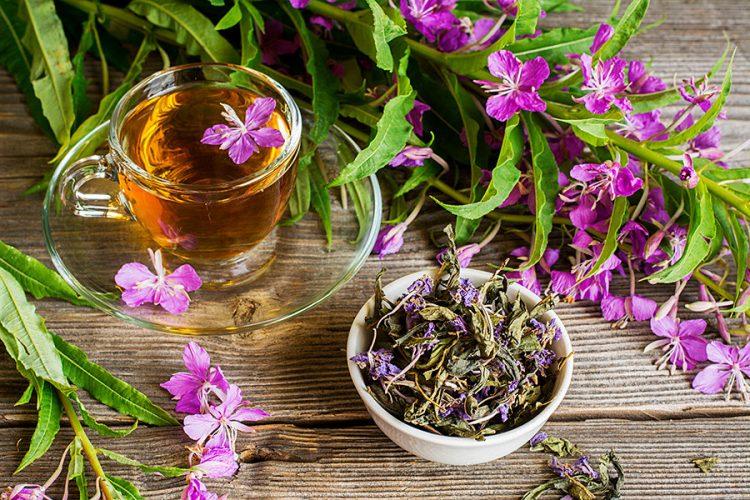 Čaj od vrbovice